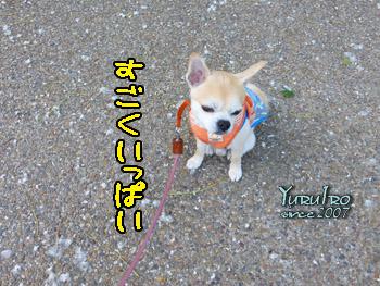 yuruiro20150604_k002