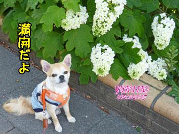 yuruiro20150528_k003