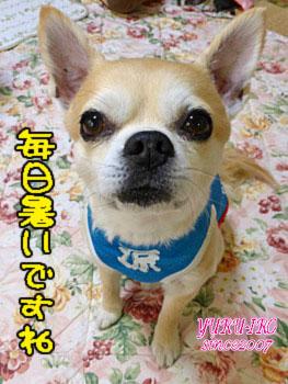 yuruiro20150530_k001
