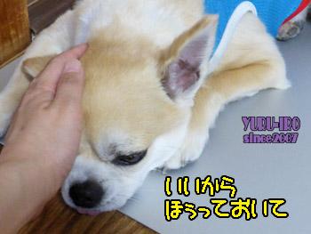yuruiro20150605_k004