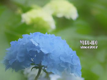 yuruiro20150609_k003