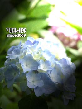 yuruiro20150609_k004