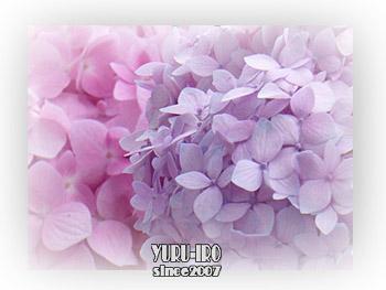 yuruiro20150609_k005