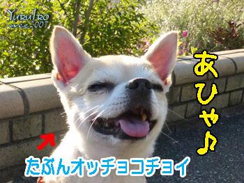 yuruiro20150620_k002