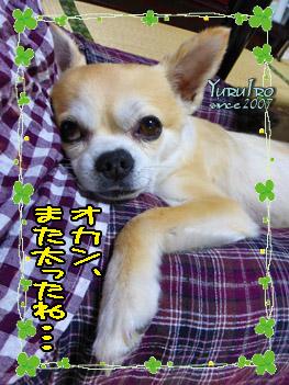 yuruiro20150623_k00201
