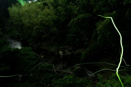 2015 平沢ホタル_2