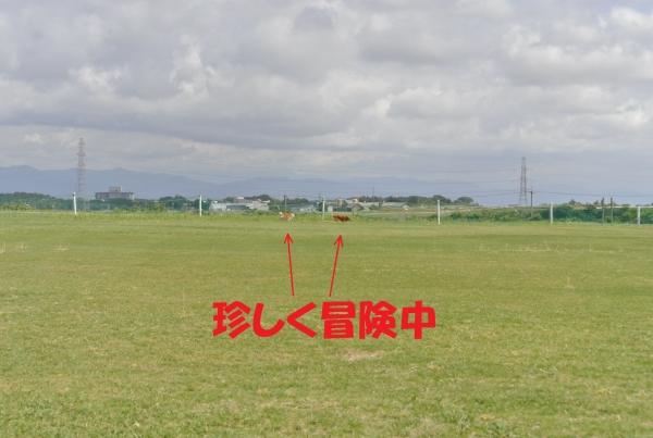 DSC_8152.jpg