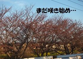 20153281.jpg