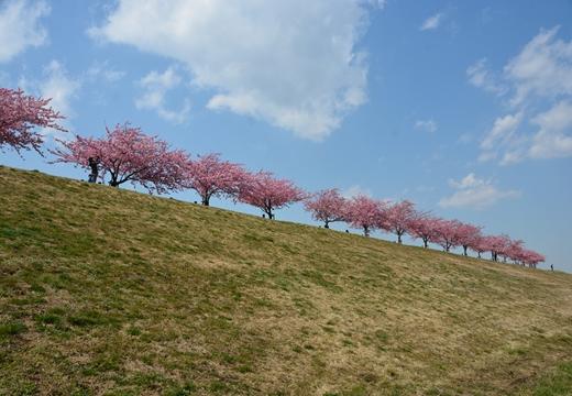 桜・池袋 (3)_R