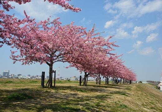 桜・池袋 (11)_R
