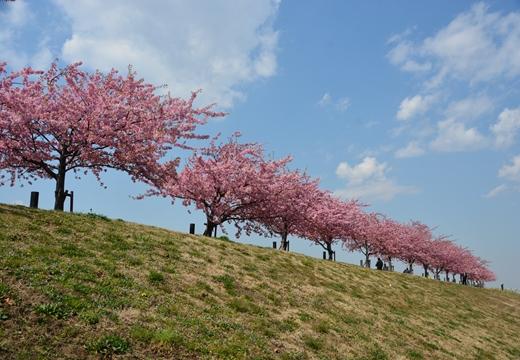 桜・池袋 (9)_R