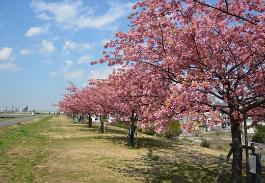 桜・池袋 (18)_R