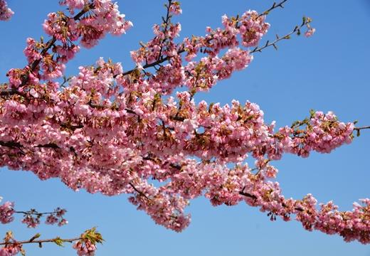桜・池袋 (28)_R