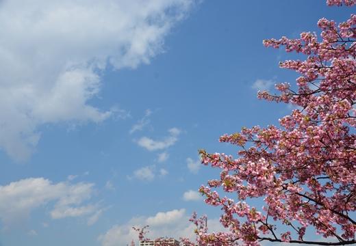 桜・池袋 (40)_R