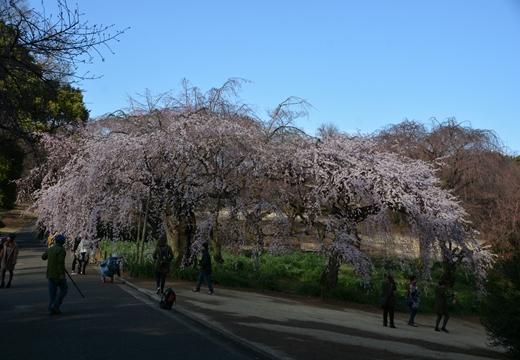 国立 高田邸 (278)_R