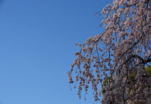国立 高田邸 (295)_R