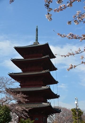 桜の街 (152)_R