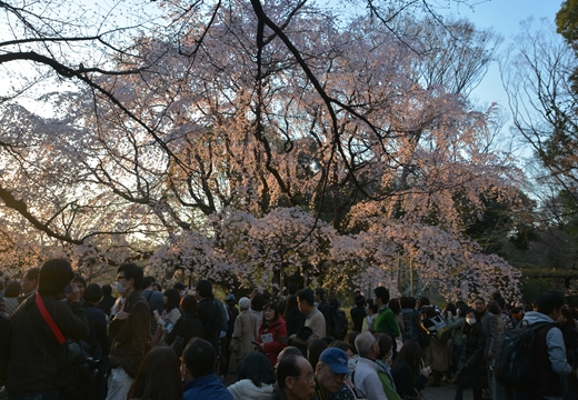 桜の街 (216)_R