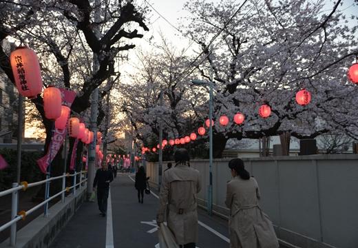 桜の街 (231)_R