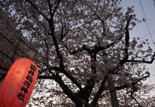 桜の街 (234)_R