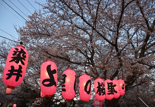桜の街 (249)_R