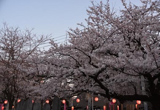 桜の街 (276)_R