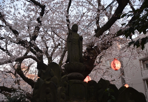 桜の街 (264)_R
