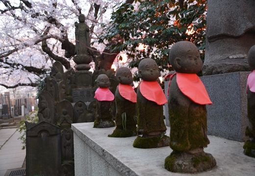 桜の街 (325)_R