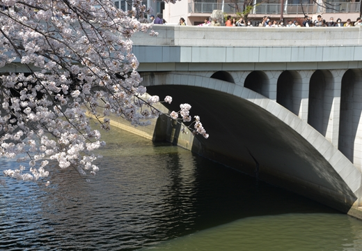 桜の街2015 (42)_R