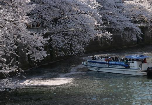 桜の街2015 (121)_R