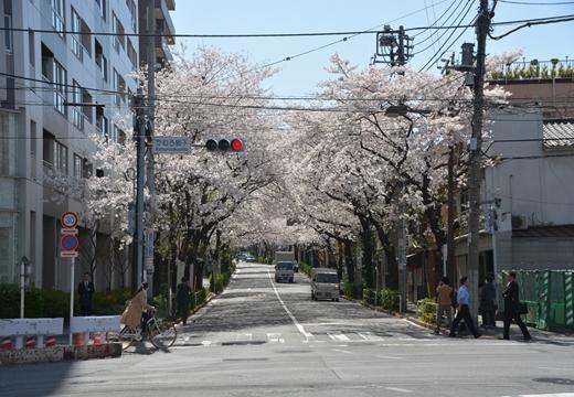 桜の街2015 (129)_R