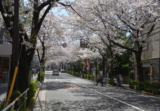 桜の街2015 (135)_R