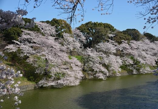 桜の街2015 (224)_R