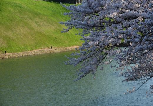 桜の街2015 (349)_R