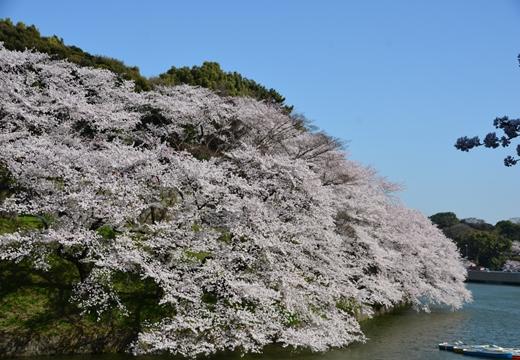 桜の街2015 (265)_R