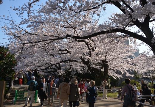 桜の街2015 (389)_R