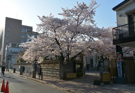 桜の街2015 (392)_R