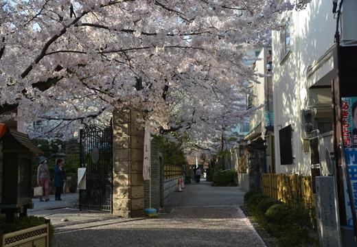 桜の街2015 (399)_R