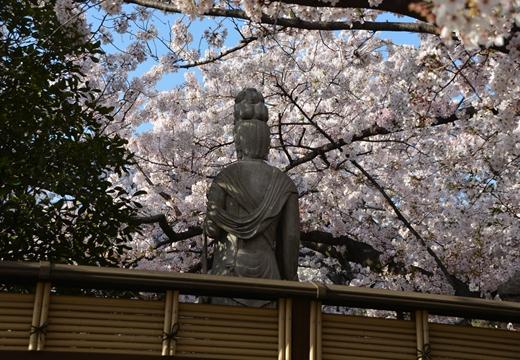 桜の街2015 (412)_R