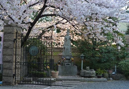 桜の街2015 (558)_R