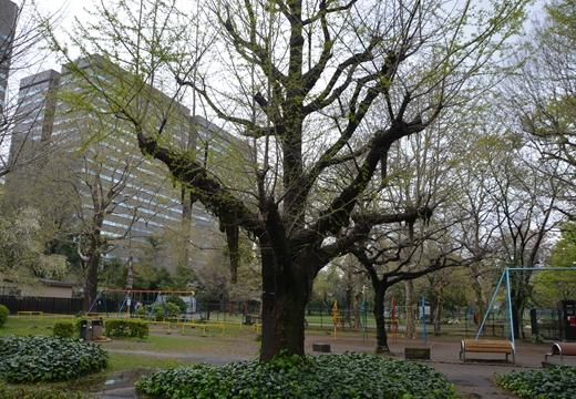 日比谷公園 (391)_R