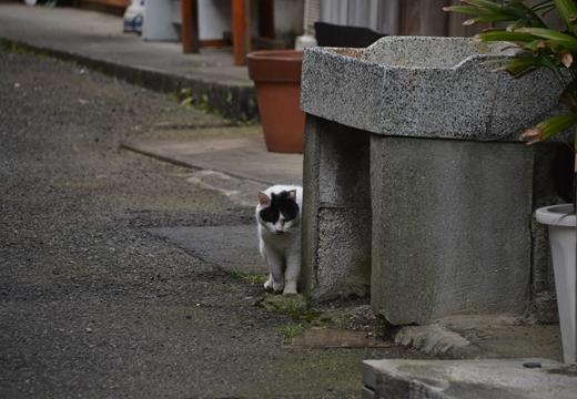 三崎町 (312)_R