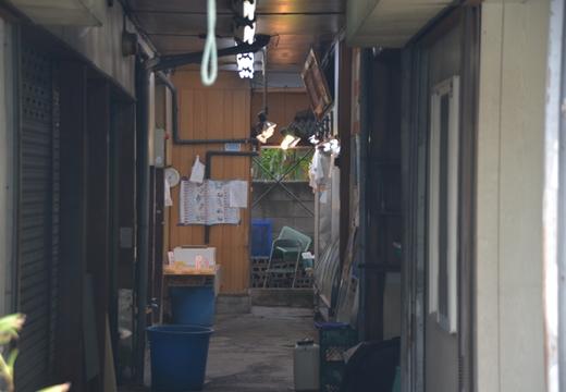 川崎201505 (236)_R