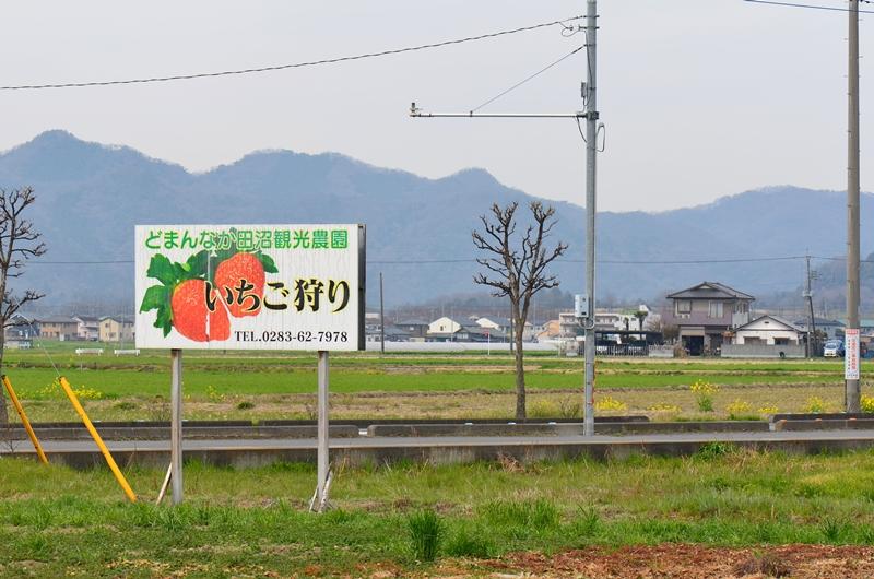 20150328 ichigo1