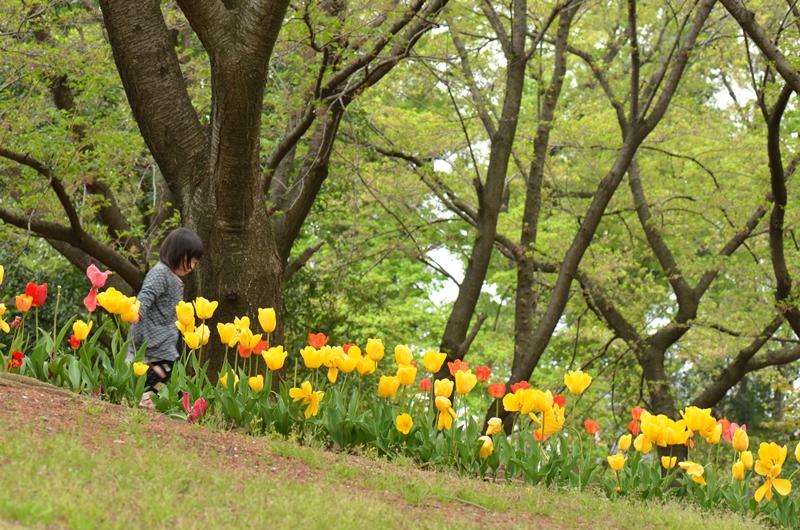 20150419 tulip5
