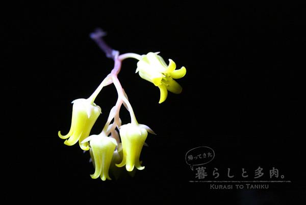 春うらら花