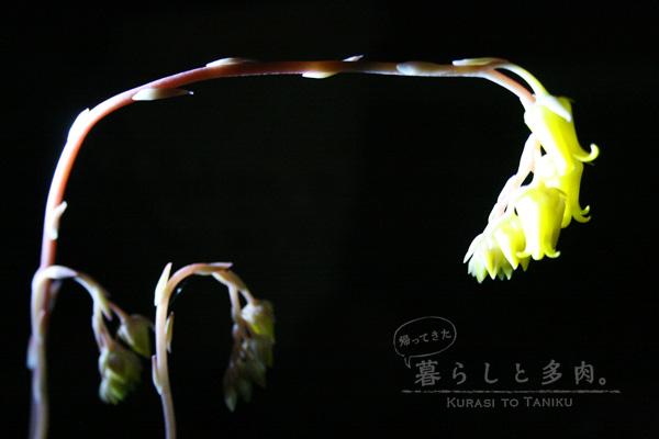 春うらら花2