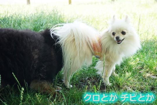 540px20150621_MiTo&カムイ-04