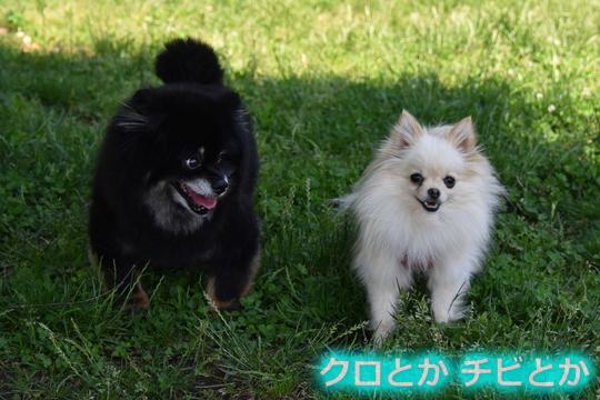 540px20150621_MiTo&カムイ-01
