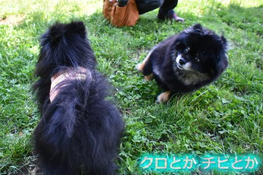 540px20150621_FUGA&カムイ-02